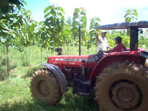 Workers with Tractor